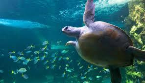 manly sealife sanctuary 4